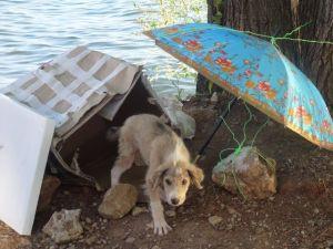 hondje in Pestani juni 2015