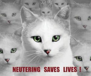 neutering campaign