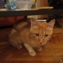 ginger 09092015 4