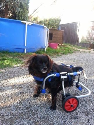 rolstoel Diana voor Tzuki from Bukarest 2.jpg